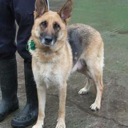 Found dog on 17 Nov 2015 in Cloonmore Park , Tallaght. found, now in the dublin dog pound.. Date Found: