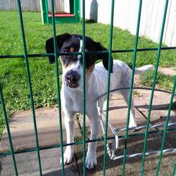 Found dog on 17 Oct 2016 in Moylagh Oldcastle Co Meath. found..5mt old Terrier X puppy...ref...386.....found in Moylagh Oldcastle Co Meath....contact Meath pound on 087 0676766...thanks...