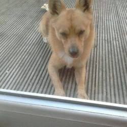 Found dog on 17 Sep 2014 in Dunshaughlin. Male...found in Greenanne, Dunshaughlin....contact Meath pound if you have any information...