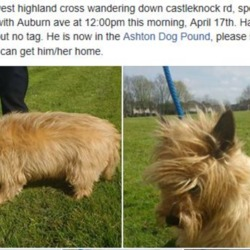 Found dog on 18 Apr 2018 in castleknock road. found castleknock road , now in the dublin dog pound..