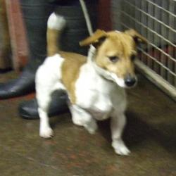 Found dog on 18 Dec 2014 in kingswood. found jrt, now in the dublin dog pound. Date Found: Wednesday, December 17, 2014 Location Found: Chestnut Grove , Kingswood