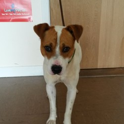 Found dog on 18 Jul 2014 in Co Wicklow. Found Rathdrum, Wicklow. Contact Wicklow Dog Pound for information on 040444873. Available for rehoming from 25/7/14 if owner does not come forward.
