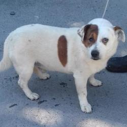 Reunited dog 18 Jul 2017 in Bawnogue , Clondalkin. UPDATE...OWNER FOUND...found, now in the dublin dog pound... Date Found: Monday, July 17, 2017 Location Found: Bawnogue , Clondalkin