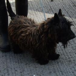 Found dog on 19 Aug 2015 in Belgard , Tallaght.. found, now in the dublin dog pound.. Date Found: Tuesday, August 18, 2015 Location Found: Belgard , Tallaght