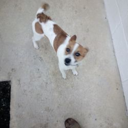 Found dog on 19 Feb 2018 in meath. needs a home...Ref no. 32. Hi guy's. This is Gwen. She is a fun, affecionate, playful, bubbley little girl. She is looking for her new forever home and would be an ideal family pet. She is microchipped. Gwen is full of affection and is a joy to be around. Please share and get in contact with any queries so this wee girl can find her new home. Thank you.