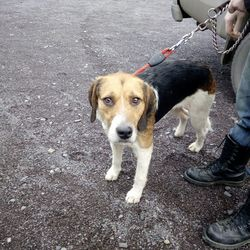 Found dog on 19 Feb 2018 in The Naul area. found...Ref 34. This handsome hound was found yesterday in The Naul area. He is quiet but very friendly and absolutely loves as many rubs as possible. If anybody has any information please contact us. Thank you.