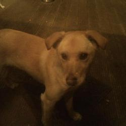 Found dog on 19 Jan 2012 in Drimnagh Dublin. Cross breed labrador. 1 years old (thereabouts)very friendy obedient and playful. Male. Not Micro-chipped
