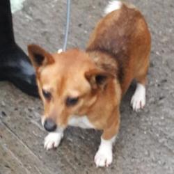 Found dog on 19 Jan 2018 in Oldbridge , Lucan. found,now in the dublin dog pound... Date Found: Tuesday, January 16, 2018 Location Found: Oldbridge , Lucan