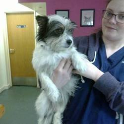 Found dog on 19 Nov 2014 in navan road. found..Young male Terrier found on Navan Road near Sacred heart Church....now in the care of Anicare Vets, Blanchardstowm....