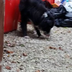 Found dog on 19 Oct 2015 in killester park. found...Does anyone recognise this dog she's running around killester park / avenue  look in good condition.
