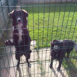 Found dog on 19 Oct 2016 in Boollies, Oldcastle Co Meath. found,...8mt old Spaniel X puppies....ref 392 & 393...found in Boollies, Oldcastle Co Meath...contact Meath Pound on 087 0676766...thanks..