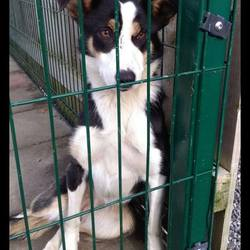 Found dog on 19 Oct 2016 in Carnakelly, Kilmainhamwood Co Meath. found...1yr old Collie X...ref 391.this lovely girl was found in Carnakelly, Kilmainhamwood Co Meath....contact Meath pound on 087 0676766...thanks..