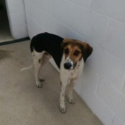 Found dog on 19 Oct 2016 in Newtown Duleek. found....2yr old Hound..ref 395....found Newtown Duleek...(had been straying for a number of weeks)...contact Meath pound on 087 0676766...thanks
