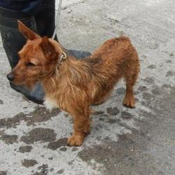 Found dog on 19 Sep 2014 in saggart. found, now in dublin dog pound  Date Found: