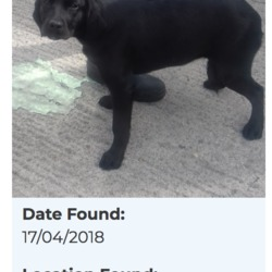 Found dog on 20 Apr 2018 in Kiltalown. found, now in the dublin dog pound...Date Found: 17/04/2018 Location Found: Kiltalown
