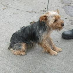 Found dog on 20 Aug 2014 in tallaght. FOUND terrier, in tallaght , now in the dublin dog pound