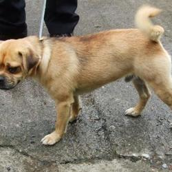 Found dog on 20 Aug 2015 in Cushlawn , Tallaght. found, now in the dublin dog pound.. Date Found: Wednesday, August 19, 2015 Location Found: Cushlawn , Tallaght