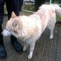 Found dog on 20 Aug 2015 in Village , Clondalkin.. found, now in the dublin dog pound... Date Found: Wednesday, August 19, 2015 Location Found: Village , Clondalkin