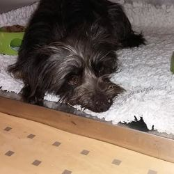 Found dog on 20 Feb 2017 in Maynooth, Co. Kildare. Dog Found Carton area in Maynooth. Please contact Maynooth Vets 016289467