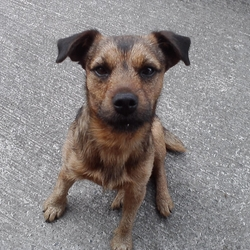 Wanted Small Dog To Rehome