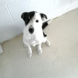 Found dog on 20 Jul 2015 in Broomfield Collon. found...12 wk old Collie X puppy...this little girl was found in Broomfield Collon ..ref 330...please if you can foster this baby contact Kathy on 086 3696413..thanks..