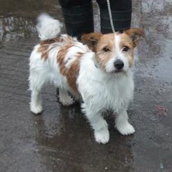 Found dog on 20 Nov 2014 in walkinstown. found terrier, now in dublin dog pound... Date Found: Wednesday, November 19, 2014 Location Found: Found Tallaght , Muckross Walkinstown