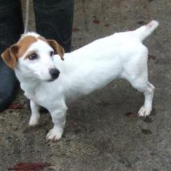 Found dog on 20 Oct 2014 in tallaght. found jrt now in dublin dog pound... Date Found: