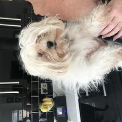 Found dog on 20 Oct 2017 in Swords . I found this female dog in the swords area, she's in bad condition with a red patent leather collar with diamond flowers on it but with no number