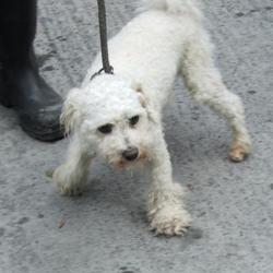 Found dog on 20 Sep 2016 in Whitehall Road , Terenure... found, now in the dublin dog pound.. Date Found: Monday, September 19, 2016 Location Found: Whitehall Road , Terenure