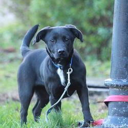 Found dog on 21 Jan 2015 in dublin... found dog, now in the dublin dog pound