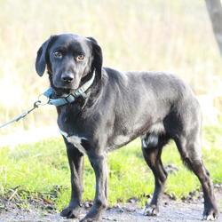 Found dog on 21 Jan 2015 in dublin. found now in the dublin dog pound...