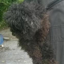 Found dog on 21 Jul 2016 in Belgard Road , Tallaght. found, now in the dublin dog pound.. Date Found: Wednesday, July 20, 2016 Location Found: Belgard Road , Tallaght