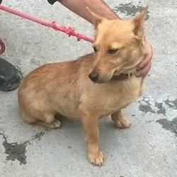 Found dog on 21 Jun 2016 in Yellow Meadows Est , Clondalkin. found, now in the dublin dog pound.. Date Found: Monday, June 20, 2016 Location Found: Yellow Meadows Est , Clondalkin