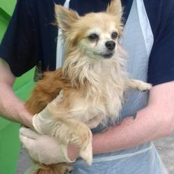 Found dog on 21 Jun 2017 in Bolbrook , Tallaght. found, now in the dublin dog pound... Date Found: Monday, June 19, 2017 Location Found: Bolbrook , Tallaght