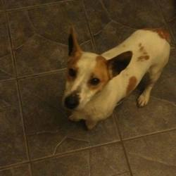 Found dog on 21 Nov 2015 in ballycullen/firhouse area tallaght. found, now in the dublin dog pound...Male dog found in ballycullen/firhouse area tallaght has been there for three days finder couldent keep him so he is now in Aston pound do you know this dog..dogs aid