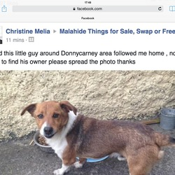 Found dog on 22 Apr 2014 in Donnycarney Dublin. Male, friendly