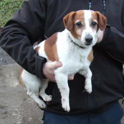 Found dog on 22 Jan 2015 in clondalkin. found jrt, now in the dublin dog pound. Date Found: Wednesday, January 21, 2015 Location Found: Clondalkin , Village