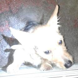 Found dog on 22 Jan 2015 in lucan. found terrier,now in the dublin dog pound.. Date Found: Wednesday, January 21, 2015 Location Found: Lucan , Village