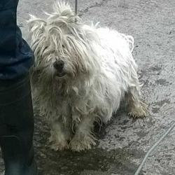 Found dog on 22 Jul 2015 in Belgard Road , Tallaght. found, now in the dublin dog pound.. Date Found: Tuesday, July 21, 2015 Location Found: Belgard Road , Tallaght