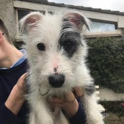 Found dog on 22 Mar 2018 in dublin.... found, now in the dublin dog pound...