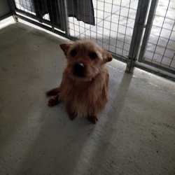 Reunited dog 22 Mar 2018 in kells . update reunited....found...This little fella was picked up in kells today, any information please contact 0870973911, thanks