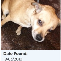 Reunited dog 22 Mar 2018 in Woodview Est, Lucan. UPDATE REUNITED...found, now in the dublin dog pound..Date Found: 19/03/2018 Location Found: Woodview Est, Lucan