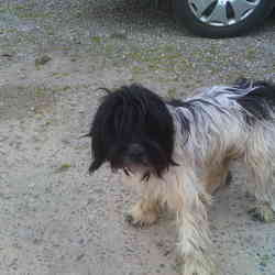 Found dog on 22 May 2012 in newport. white and black shaggy haired dog, difficult to see eyes with hair, very timid. Tel