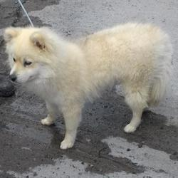 Found dog on 22 May 2017 in Tallaght , Kiltipper Road. found, now in the dublin dog pound.... Date Found: Friday, May 19, 2017 Location Found: Tallaght , Kiltipper Road