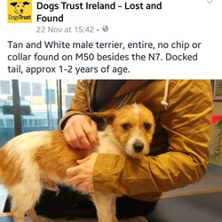 Found dog on 22 Nov 2015 in Dublin . Dog found - on m50 close to n7 beautiful little guy I had him in the car and he is very friendly and so well behaved please share he's currently in a dog pound if someone knows the owner or at least is looking for a new dog he would honestly make the most amazing companion.