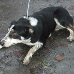 Found dog on 22 Nov 2016 in Cruagh Lane , Rathfarnham. found, now in the dublin dog pound.. Date Found: Monday, November 21, 2016 Location Found: Cruagh Lane , Rathfarnham
