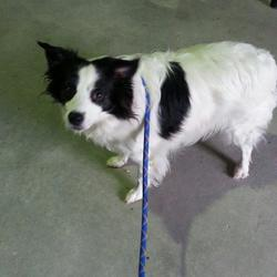 Dog looking for home 22 Oct 2014 in navan. UPDATED...OWNER SURRENDERED...NEEDS A NEW HOME..CONTACT DOGS IN DISTRESS  2yr old Collie X....neutered....found in Townspark Navan...ref 455....contact Meath pound