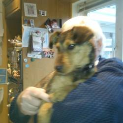 Found dog on 22 Oct 2014 in newtown. FOUND: This young female terrier cross has been roaming in the Lobinstown/Newtown area for about 10days and has been picked up by a kind man. Approx 6/7 months. Proof of ownership required. Now in the care of Last Hope