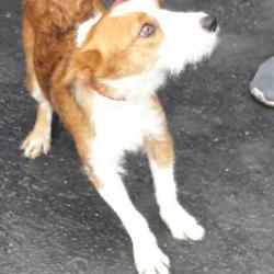 Found dog on 22 Sep 2017 in Clondalkin ,. found, now in the dublin dog pound... Date Found:
