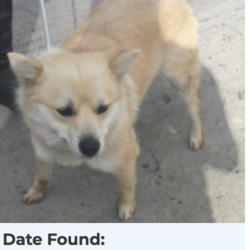 Found dog on 23 Apr 2018 in clondalkin. found, now in the dublin dog pound...Date Found: 20/04/2018